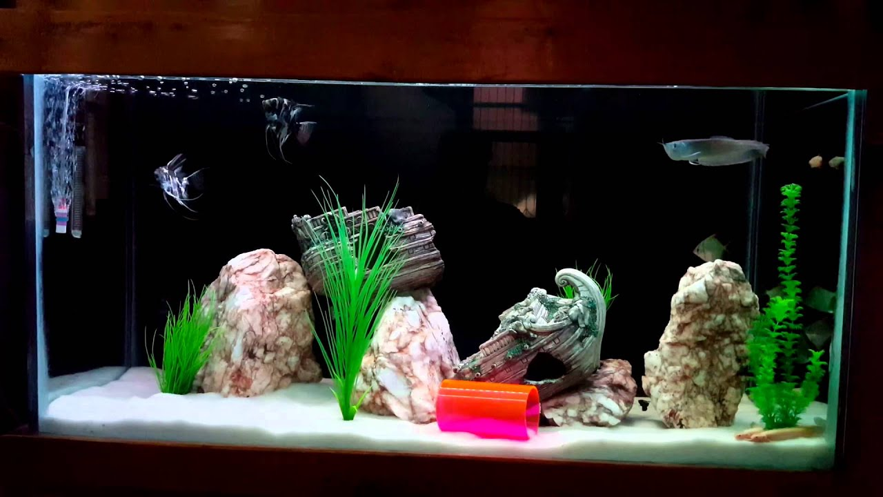 4ft Fish Tank Setup
