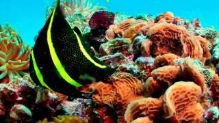 ~Фантастический релакс~ Морская черепаха в коралловых рифах