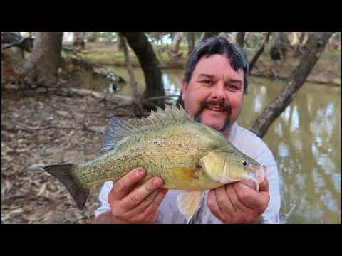 Fishing For Yellowbelly, Golden Perch Or Callop