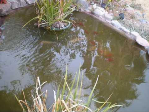 Pond homemade bio filter part 3 youtube for Diy pond bio filter