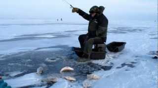 Ловля окуня зимой.Куршский залив.