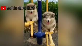 抖音可爱动物系列(3)----暖心的大狗狗 被吓坏的猫咪