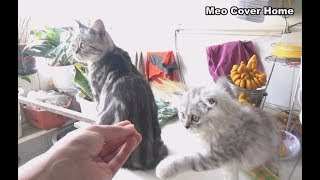 Kittens And Mother Cat Play Around Bacolny | Funny Cat And Kittens