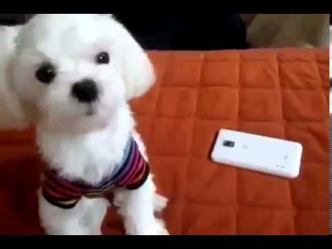 Cute Puppy Singing
