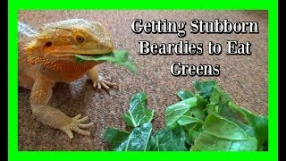 How to Get your Beardie to Eat Greens