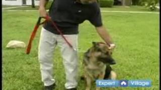 Basic Dog Training Techniques : Heel Command In Dog Obedience Training