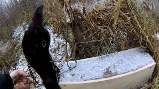 Охота на норку проходными капканами 2017