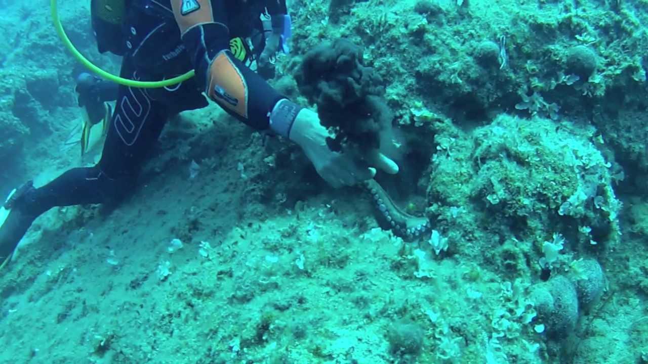 Faire de la plongée en crete