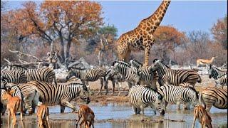 Safári na Namíbia |6| Etosha