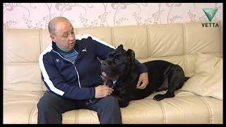 Дружба человека и собаки