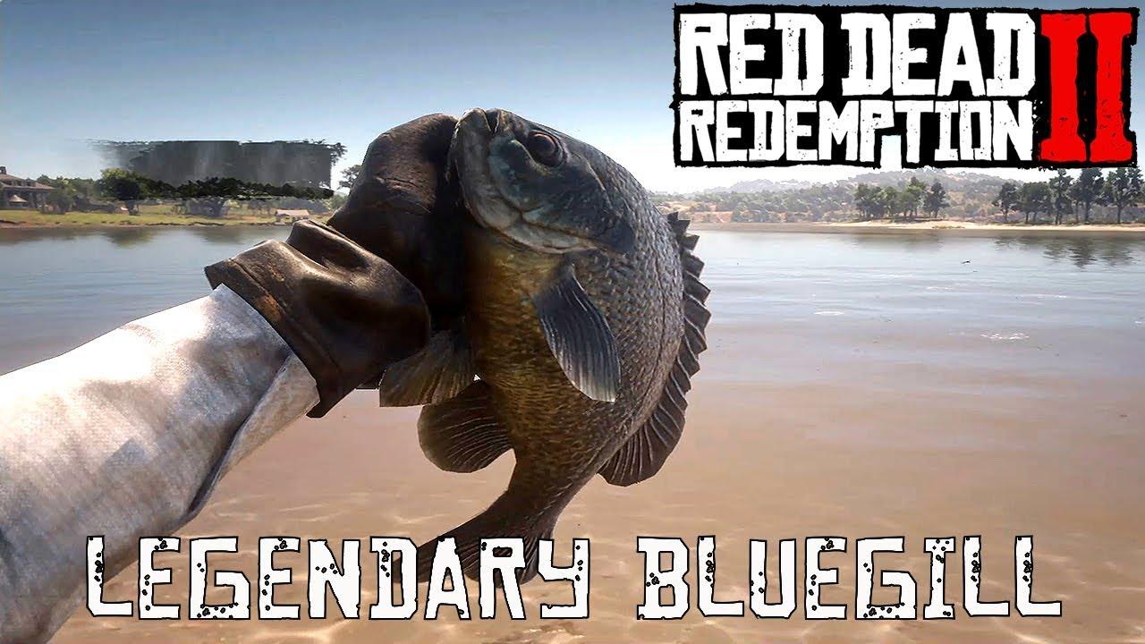 legendärer katzenwels red dead redemption 2