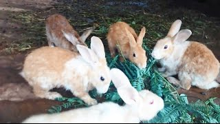 Very Cute Rabbit Run Around In The Rabbit Farm In India 2015 [HD VIDEO]