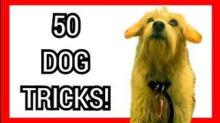 50 DOG TRICKS