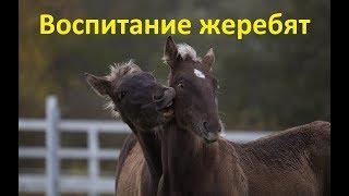 видео Нельзя ли без лошади?