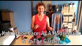 Kalanchoe Care: As A Houseplant & In The Garden