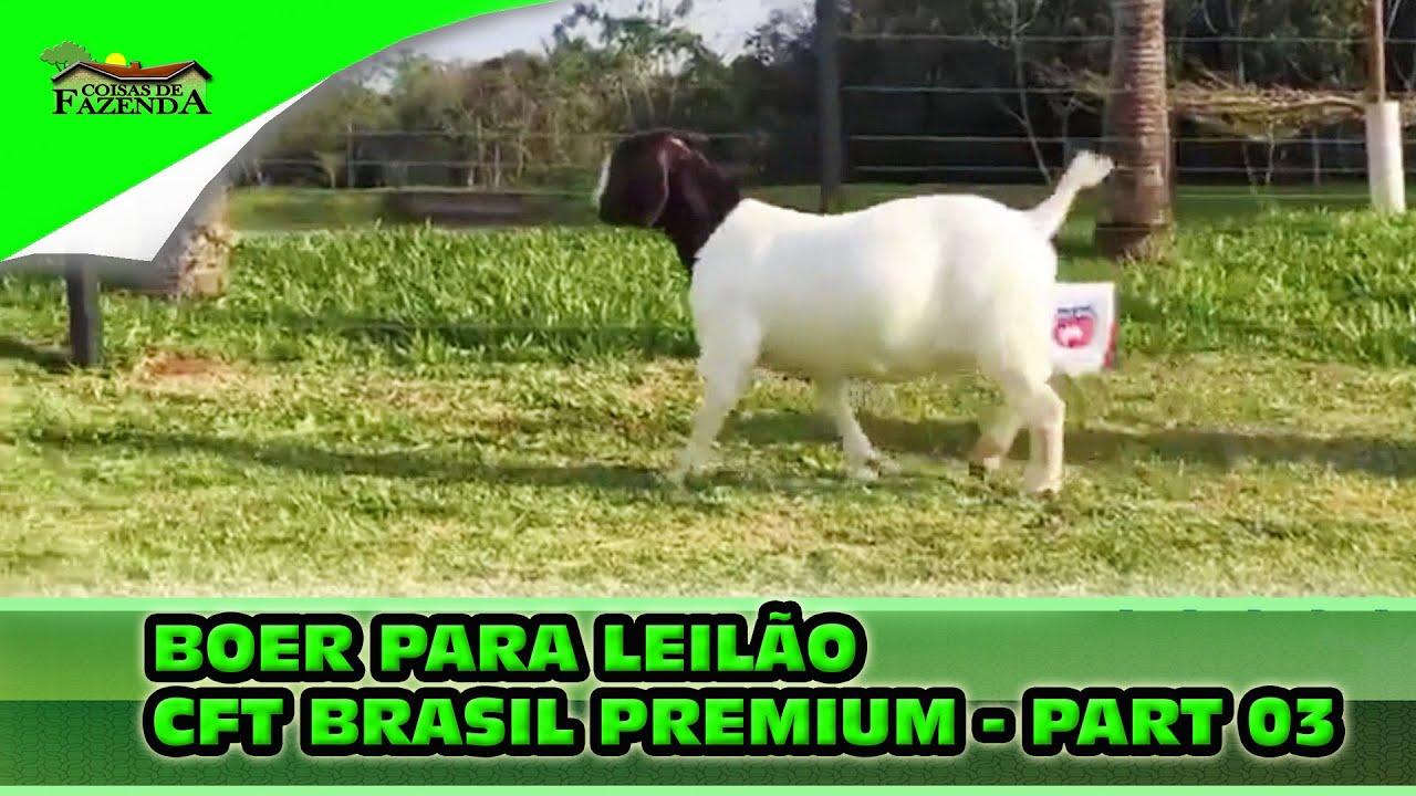 BOER PARA LEILÃO CFT BRASIL PREMIUM   PART 03