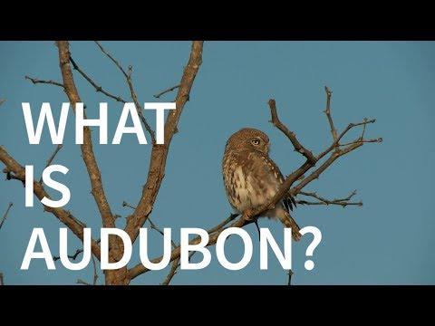 What Is Audubon?