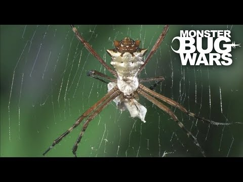 Assassin Bug Collection | MONSTER BUG WARS