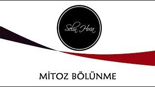 1-mitoz-blnme-10-snf-biyoloji-tyt-24