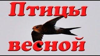 Птицы весной. Презентация для детей. Окружающий мир.