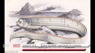 GIANT OARFISH CAPTURED ON VIDEO FOR THE FIRST TIME JUNE 10, 2013 (GABE HASH)