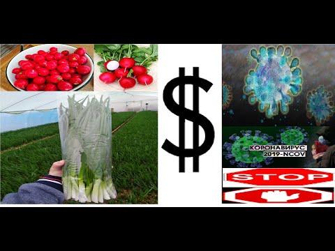 КОРОНАВИРУС против цен на овощи