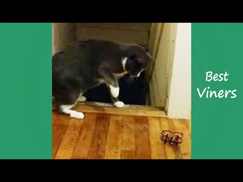 Try Not To Laugh or Grin While Watching Funny Cat & Dog Vines - Best Viners 2019