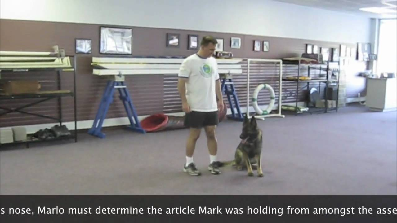 Competition Obedience | Atlanta Dog Training | CPT Training