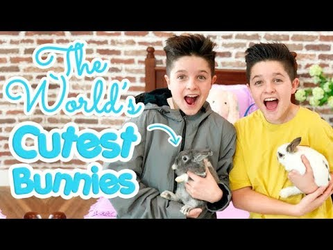 The World's Cutest Bunnies | Brock and Boston