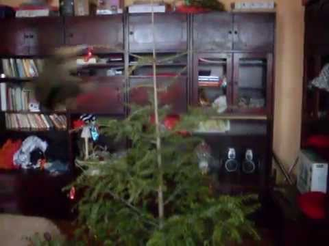 Thumb of Behold the Perfect Christmas Tree Attack Leap video