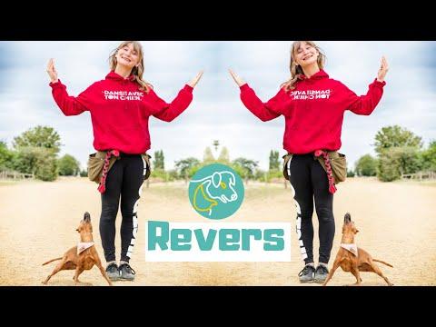 [TUTO] Apprendre le Revers à son chien avec l'éducation positive #dogdancing
