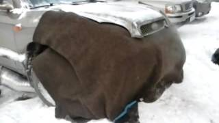 Замерзла машина: Безопасен ли отогрев автомобиля тепловой пушкой (Советы от РДМ-Импорт)
