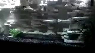 3d Aquarium Background Diy 55 Gallon Freshwater