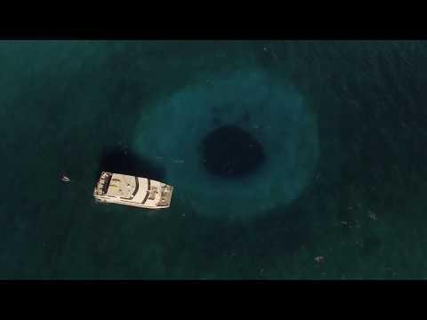 The Lost Ocean Blue Hole Sharks - Nassau, Bahamas