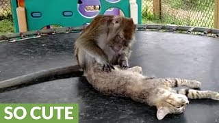 Rescued kitty gets grooming session from monkey