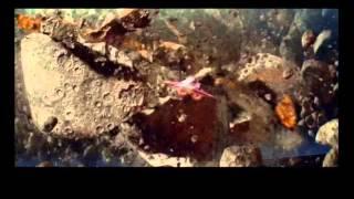 STAR WARS EPISODE II - L'ATTAQUE DES CLONES - Bande annonce (vo)