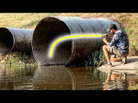 HUGE MYSTERY CREATURE caught in URBAN CREEK!