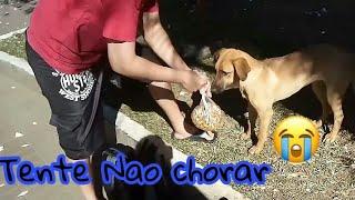 Cachorrinho de rua chora ao receber um saquinho de raçao❤❤