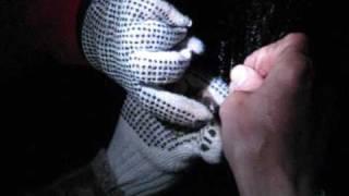 Чернобыль, животный мир зоны отчуждения - летучие мыши(Видео об экспедиции по изучению фауны рукокрылых Чернобыльской зоны отчуждения. В районе Чернобыля обнару..., 2009-07-26T12:17:53.000Z)