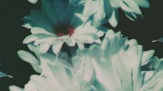 Lana del rey - groupie love (official instrumental)