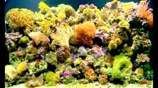hypnotic fish : binaural sounds