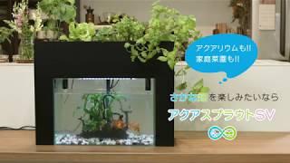 日本初!さかなで野菜を育てる「さかな畑」家庭用キット、日本経済新聞社「未来ショッピング」上で1万円の特別チケット発売開始