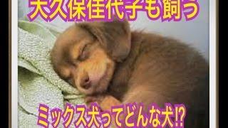ペットで犬を飼おうと迷っている方へ〜ミックス犬〜 世の中には様々な犬...