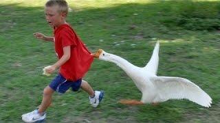 Zwierzęta Nigdy Nie Uda Się Uczynić Nas Śmiać - Bardzo Śmieszne Zwierząt