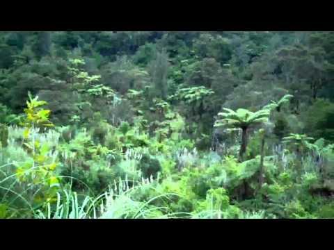 TastyTrek In Omahuta And Puketi Forests