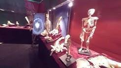 PetriFest 8 - Super Expo -etkot (inkkareita, dinosauruksia ja anatomiaa)