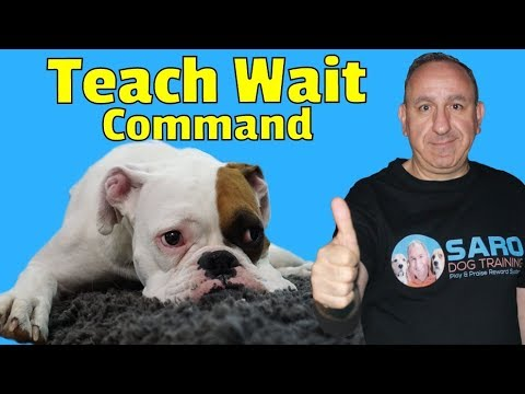 Training dog to stay home alone - Teach a dog to wait -  Part 1