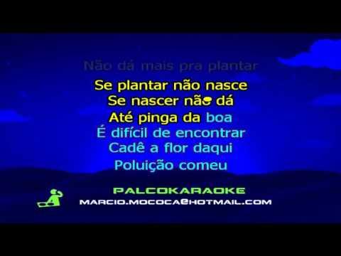 playback da musica xote ecologico