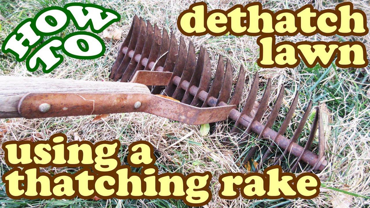 How To Dethatch Lawn Thatch Thatching Dethatching Rake
