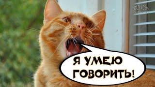 Говорящие животные / самое смешное видео